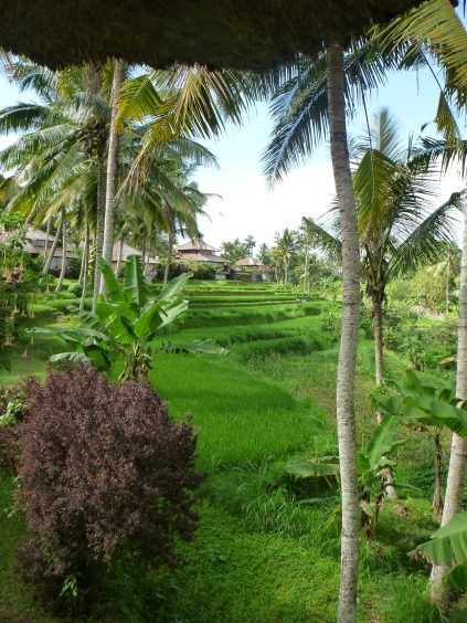 Amandari Villa 15 - Rice Paddy View