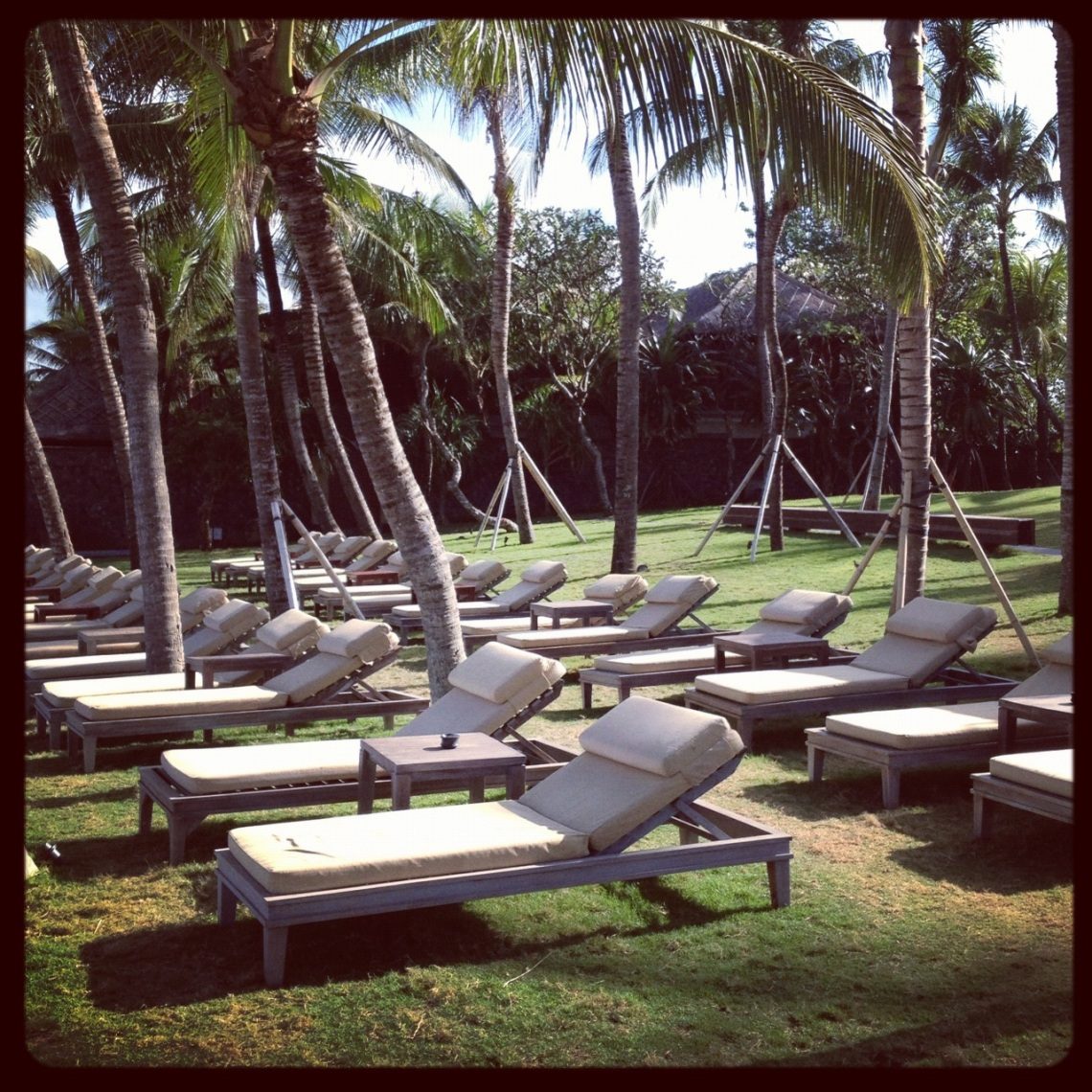 Sun Lounges and Palm Trees!