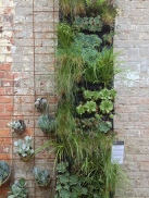 Vertical Garden at Ethos