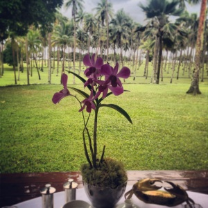 Daily breakfast view from Plantation House