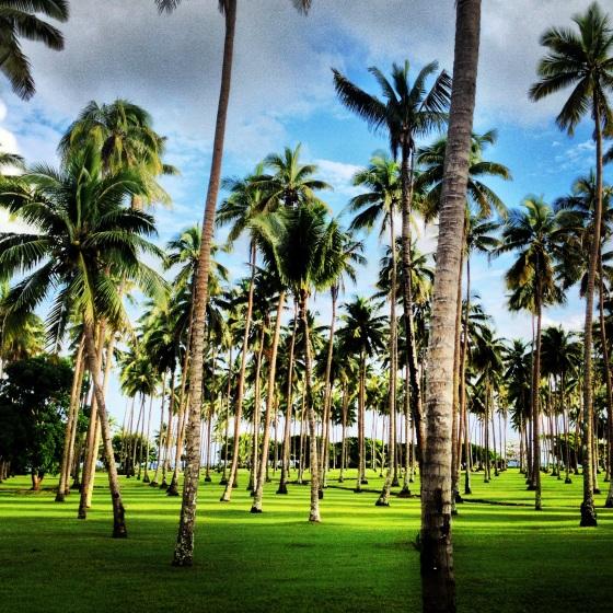 Coconut Grove - Laucala Island