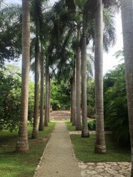 Avenue of palms at Hacienda San Jose