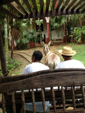 Donkey ride to the cenote!