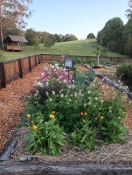 Organic vegetable and herb garden at Gaia Retreat & Spa